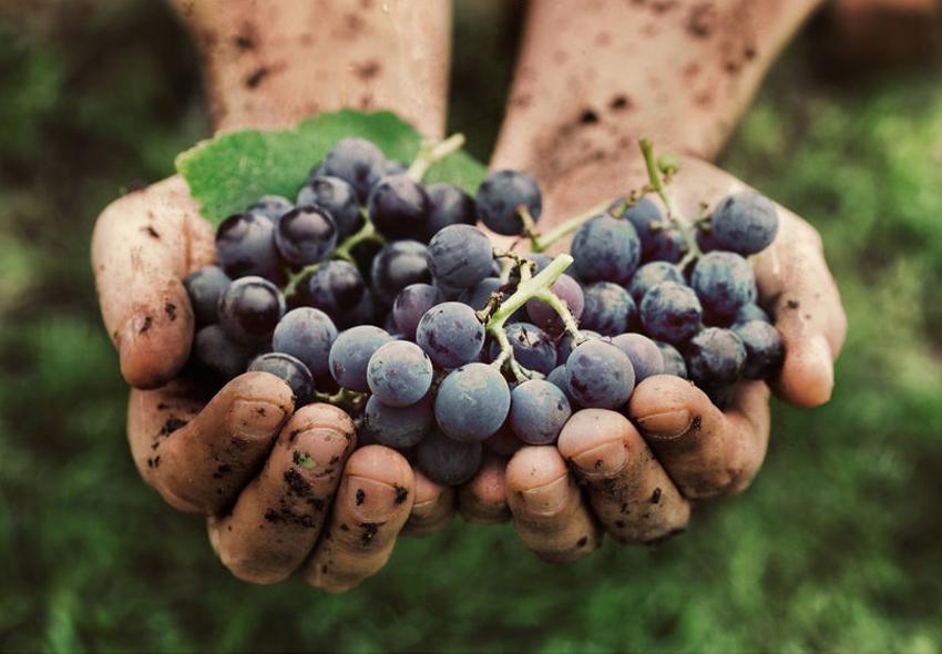 Bio-Wein im Weinhandel